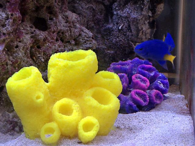 Odlitek mořské houby