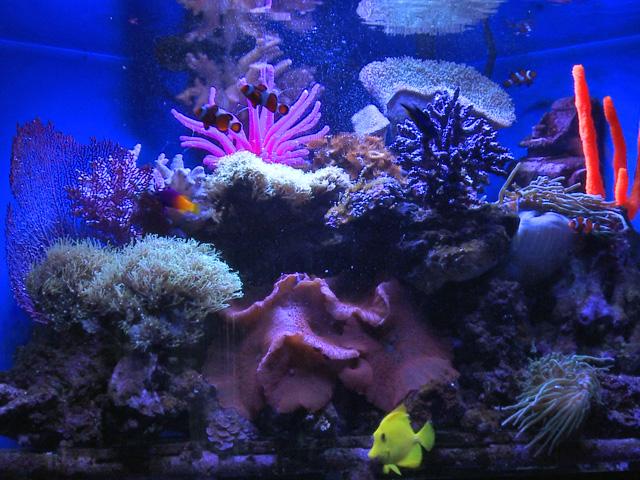 Vlastní prvky do akvária